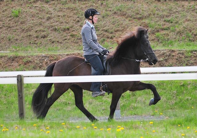 Bj la von t ltmyllan islandpferdehof toeltmyllan for Exterieur beurteilung pferd