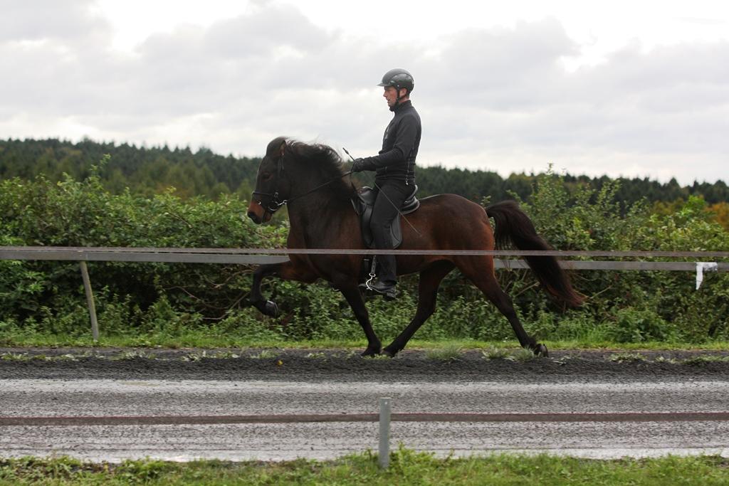 Edda von t ltmyllan islandpferdehof toeltmyllan for Exterieur beurteilung pferd